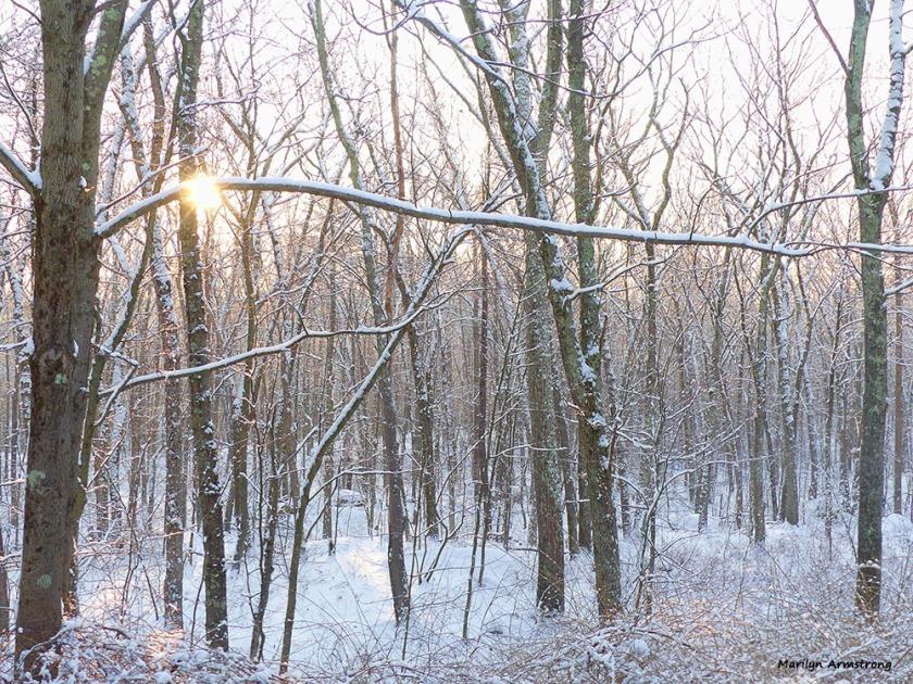 180-woods-snow-dawn-010217_046
