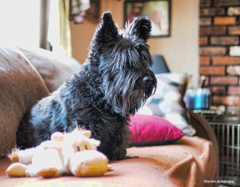 300-bonnie-new-toy-dogs-270217_017