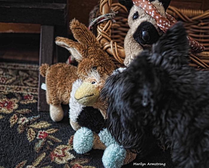 300-dog-toys-2-020317_008