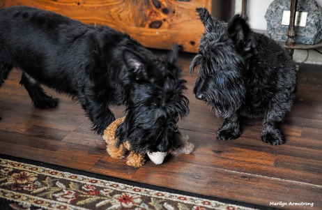 300-dogs-with-toys-020317_02