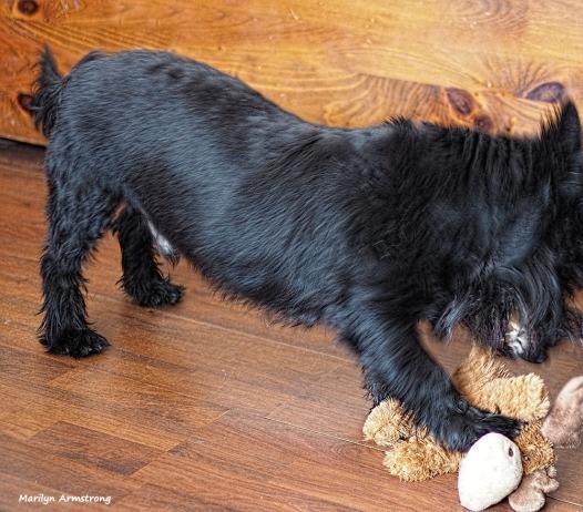 300-fierce-gibbs-dog-toys-020317_023