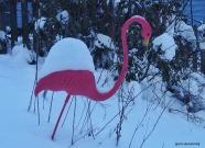 300-fred-in-snow-ga-110217_067
