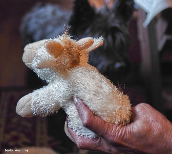 300-hand-bonnie-new-toy-dogs-270217_020