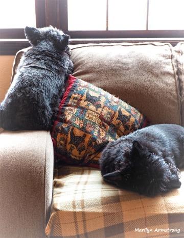 300-sunday-dogs-290117_06