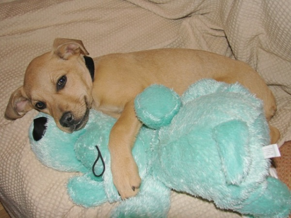 bluedog-5