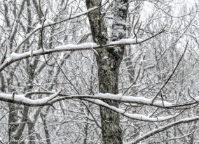 180-Backyard-Last-Snow-20170310_028