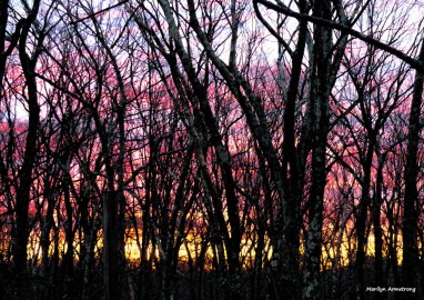 First dawn of spring 2017