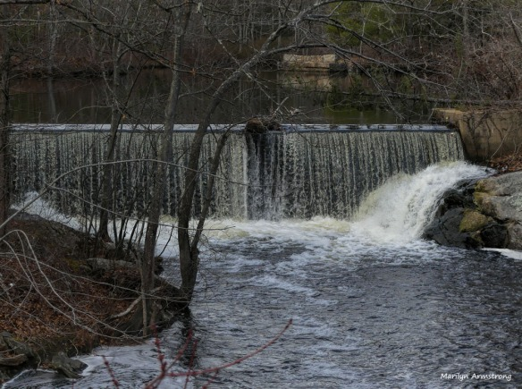 This is the most water I've seen coming over a dam on the Blackstone in several years. We didn't get as much snow as we usually get, but we did get quite a lot of rain and it has made a difference.