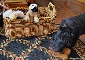 300-dog-toys-2-020317_020