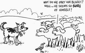 Bellwether sheep