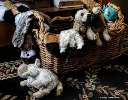 180-Dog-Toys-041617_052