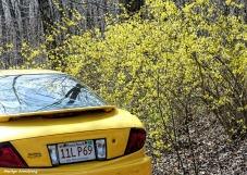 180-Last of yellow car-041617_009