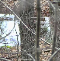 180-Pond-April-Woods-040717_008