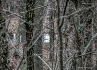 180-Pond-April-Woods-040717_014