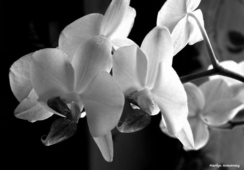 300-bw-orchids-two-041917_015