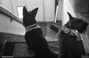 300-bw-stairs-dogs-tub-073016_022