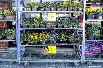 300-flowers-for-sale-ga-041317_051