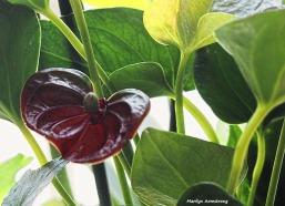 300-foliage-more-041917_005
