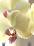 300-orchids-two-041917_031