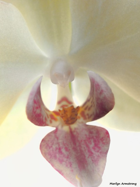 300-orchids-two-041917_049