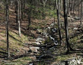 300-stream-curley_019