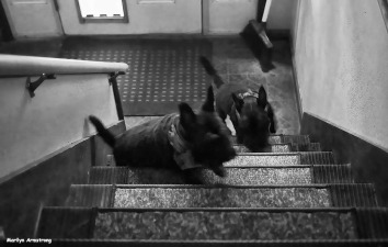 Up the stairs!