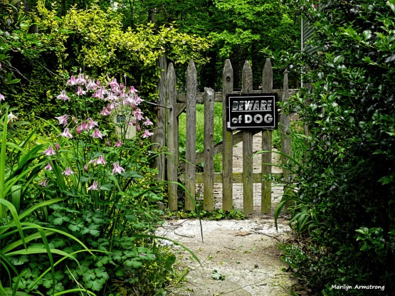 180-Gate-Late-May-Garden-052417_028