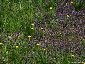 180-Meadow-Early-May-1_050317_008