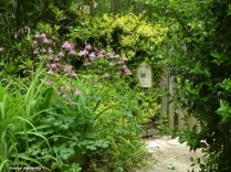180-New-Late-May-Garden-052417_026