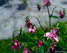 300-columbine-mid-may-051817_055
