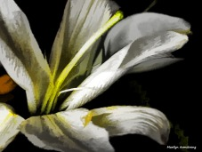 300-lily-bouquet_05