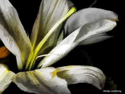 300-lily-bouquet_05