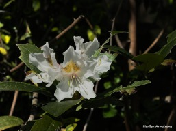 300-rhododendrons-may-garden-omd_050317_053