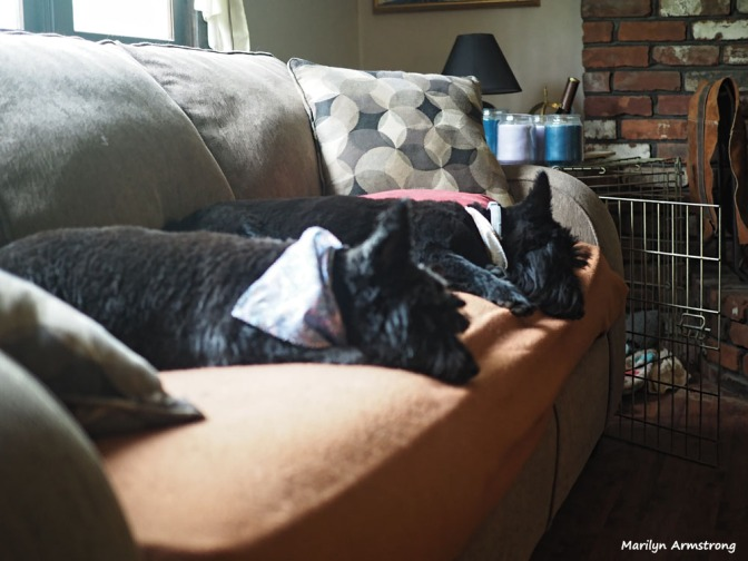 300-two-dogs-clean-051217_020