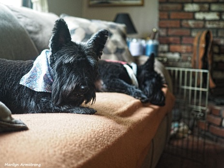300-two-dogs-clean-051217_027