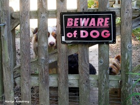 75-danger-dogs-gate-03172013-1