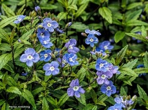 300-blue-early-may-garden-omd-2_050317_077