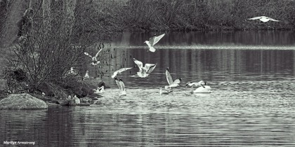 Whitin's pond