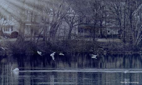 300-bw-blue-twilight-lake-birds-mar-030816_038