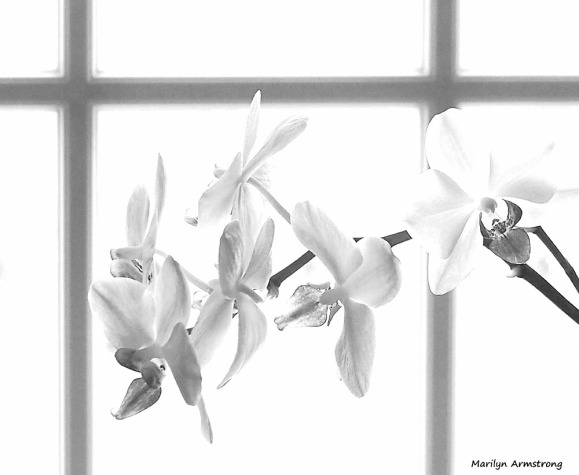300-bw-orchids2-040817_004