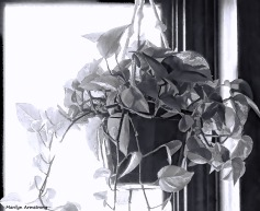 300-bw-philodendron-window-040817_012