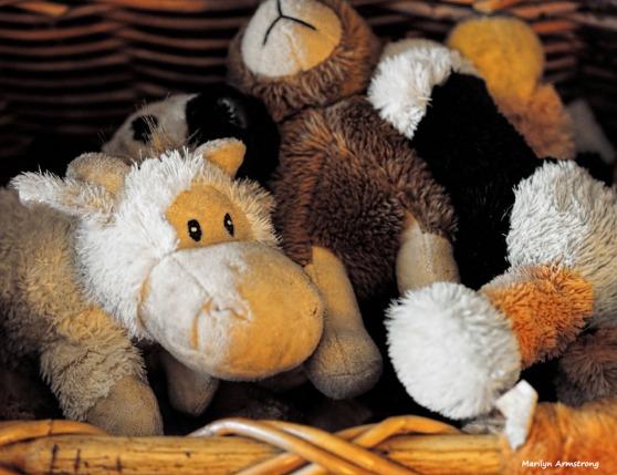 300-dog-toys-june-061117_001