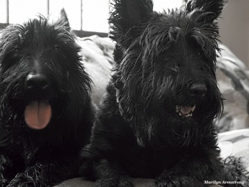 300-dogs-in-summer-062317_009