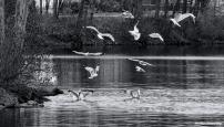 300-flying-birds-mar-030816_050
