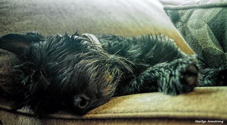 300-gibbs-sleep-061317_007