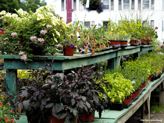 300-plants-nursery-ma-061017_026