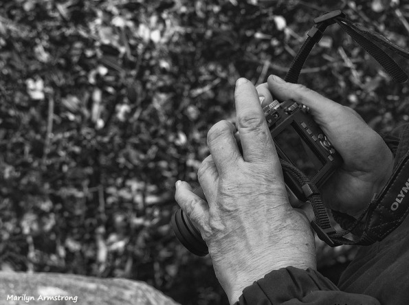 72-BW-Cherries-Hands-Amherst-River_091