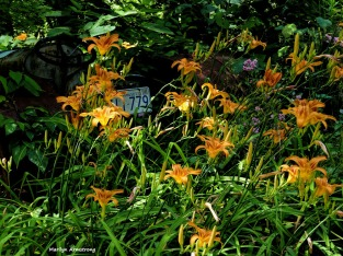 180-Lilies-Roses-Garden-July-2-070217_020