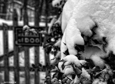 300-bw-gate-snow-ga-110217_069