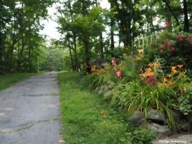 300-garden-paint-2-driveway-gaden-mar-070817_004